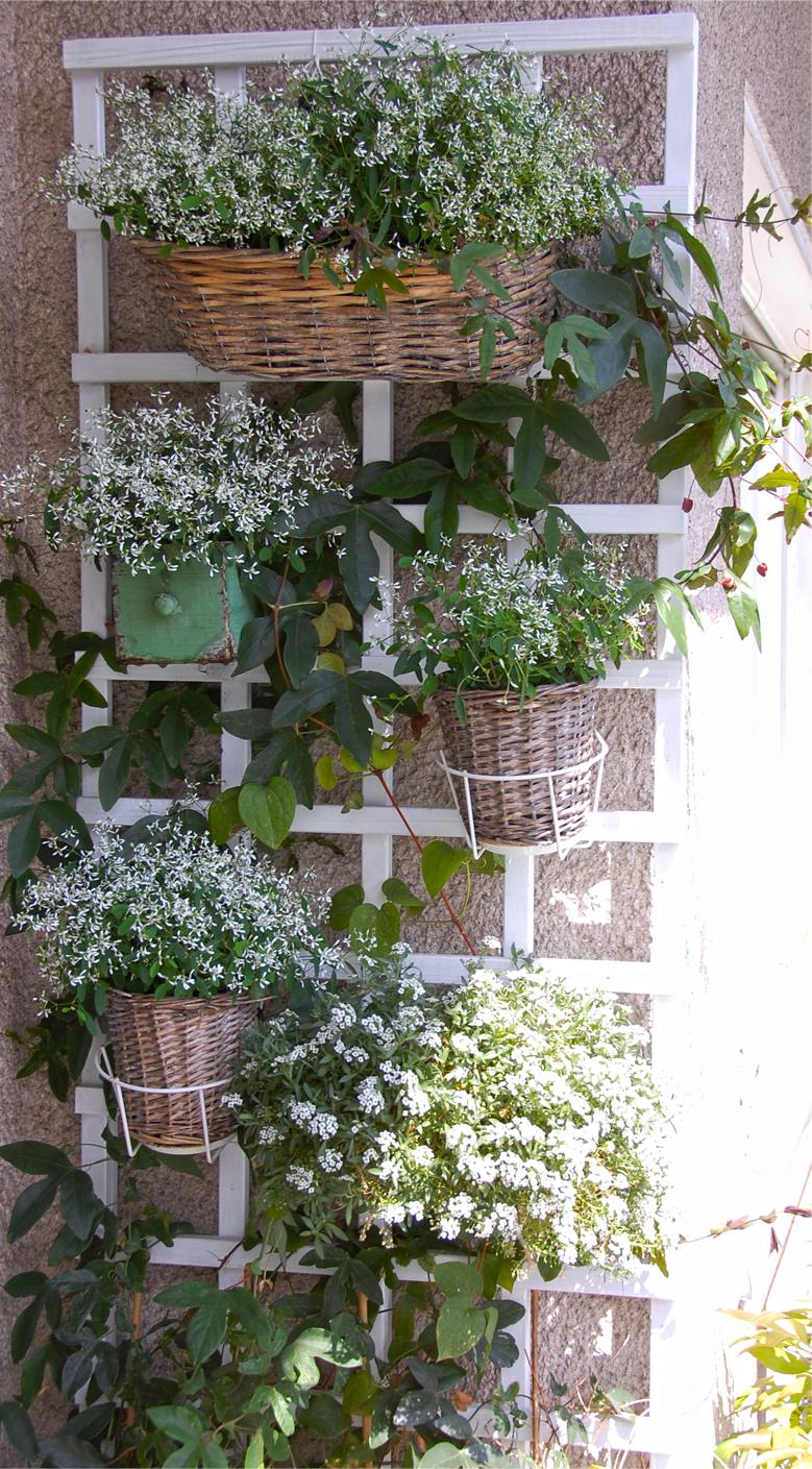 Balkon-Pflanzen